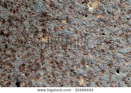 Close up of textures on bark