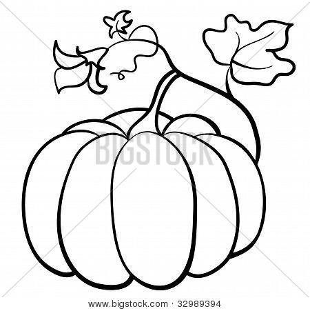 Vector pumpkin vegetable