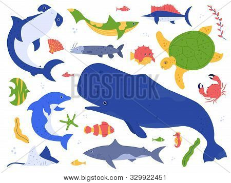 Sea Animals Species. Ocean Animals In Their Natural Habitat. Cute Whale, Dolphin, Shark And Turtle V