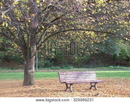 Herbst In Deutschland  Stuhl Baum Fallende Baumblätter  Beautiful Autumn  Germany Chair Tree
