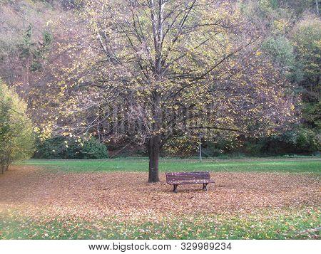 Der Schönste Herbst In Deutschland Und Auf Einem Stuhl Unter Dem Baum Sitzen The Most Beautiful Autu