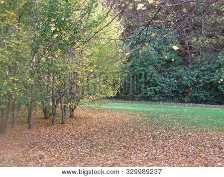 Der Schönste Herbst In Deutschland Mit Fallende Baumblätter The Most Beautiful Autumn In Germany Wit