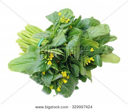Fresh Organic Brassicaceae Bunch Isolated On White