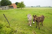 farmland landscape with two donkeys in the grass poster