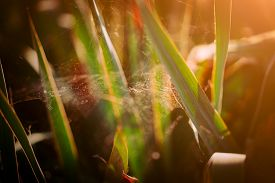 Spider On A Web In The Thicket. Macro. Sunlight
