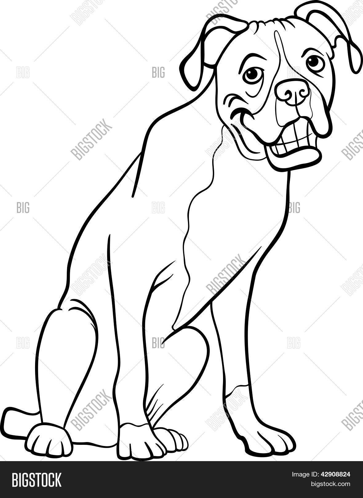 Vector y foto Boxer Perro De (prueba gratis) | Bigstock