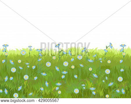 Meadow With Wildflowers. Seamless Illustration. Grass Close-up. Green Summer Landscape. Rural Pastur