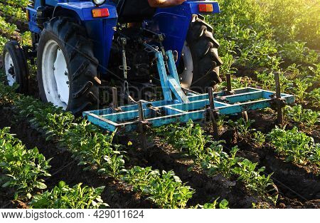 Blue Tractor With A Plow Is Cultivating A Field Of Potatoes. Agroindustry Equipment. Farm Machinery.