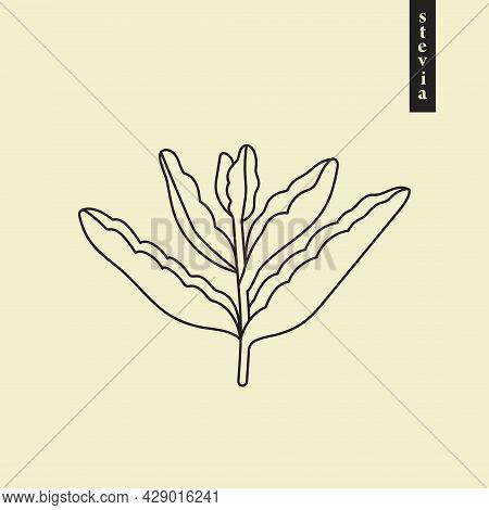 Stevia Vector Line Or Outline Drawing. Herbal Sweetener Sugar Substitute. Line Logo Illustration Of