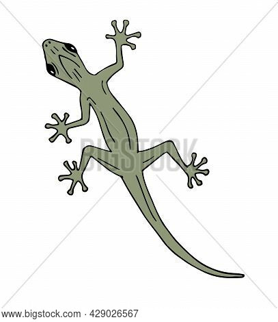 Vector Hand Drawn Doodle Sketch Colored Lizard Isolated On White Background