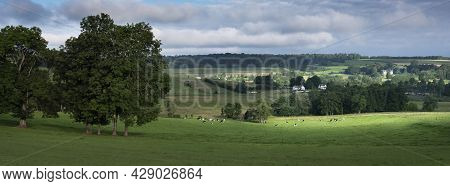 Green Grassy Meadows With Black And White Cows And Trees In French Ardennes Near Charleville In Nort