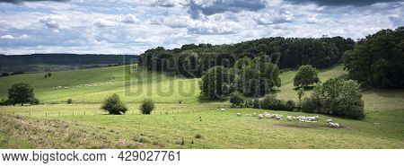 Cloudy Sky And White Cows In Green Grassy Meadows And Forest In French Ardennes Near Charleville In