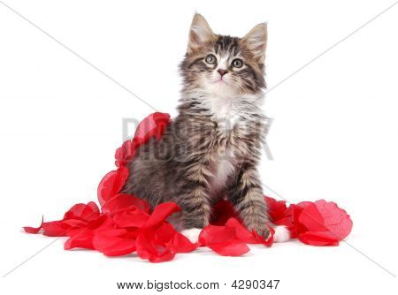 Tabby Kitten Surrounded By Roses.