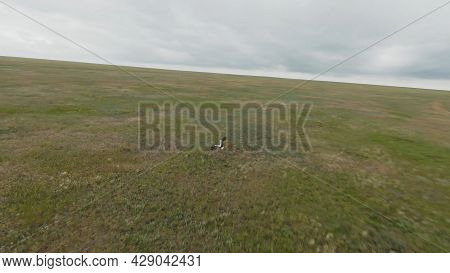 Top View Of Flying Stork. Shot. Following Flying Bird In Field On Drone. Drone Follows Flying White