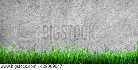 Empty Space Of Plaster Concrete Wall Grunge Texture Background With Green Grass.