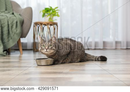Grey Tabby Cat Near Feeding Bowl At Home. Cute Pet