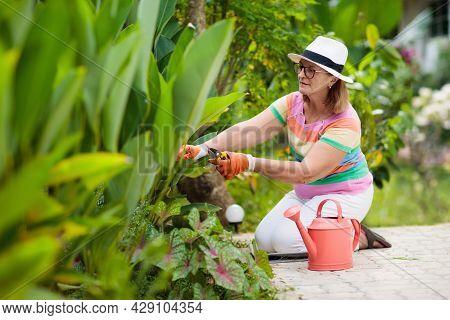 Senior Woman Gardening. Garden Plants, Flowers.