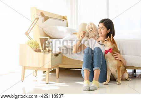 Young Asian Woman Relaxing And Playing With Three Dogs (brown Shiba Inu, White Shiba Puppy And White