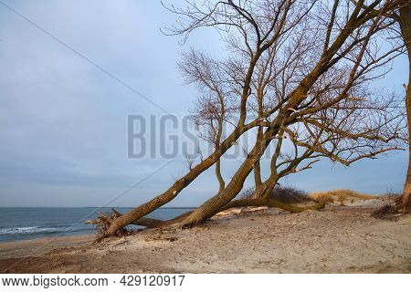 View Of The Baltic Sea Coast At The Winter Time