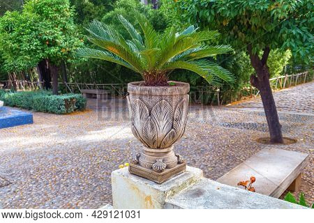 The Small Palm Tree In The Pot In The City Garden Jjnan Sbil In Fez. Morocco.