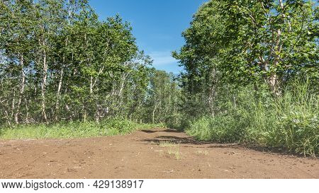 A Dirt Road Passes Through The Forest And Turns. On The Roadsides There Is Lush Grass, Green Trees.