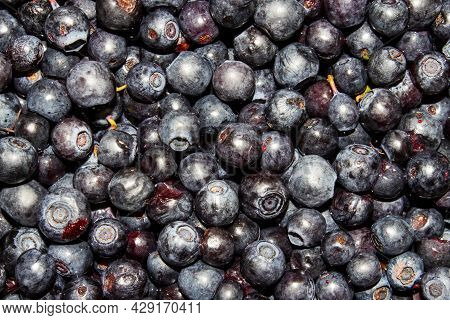 Wild Blueberry Berry.background Of Blueberries.ripe Blueberries.wild Blueberry Berry.background Of B