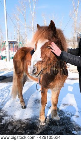 Girl Strokes Caressing A Beautiful Pony. Wintertime