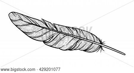 Bird Feather Sketch. Eagle Decorative Feather Isolated In White Background. Hand Drawn Vector Illust
