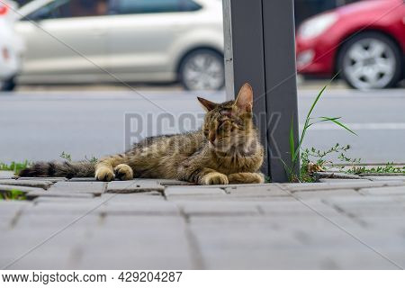 A Beaten Homeless Cat Lies Near The Road Near A Pole. Traces Of Blood And Torn Hair On The Head.