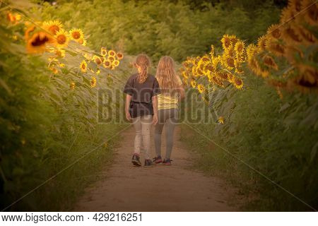 Young Sisters Cherish One Another's Company Among The Sunflowers At Dorothea Dix Park In Raleigh, Nc