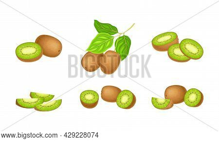 Kiwifruit Or Kiwi As Edible Berry With Fibrous Brown Skin And Green Flesh With Tiny Black Seeds Vect