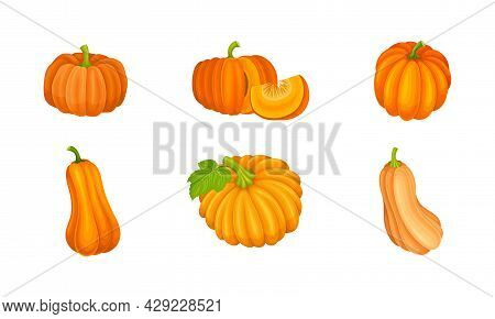 Bright Orange Pumpkin With Smooth, Slightly Ribbed Skin Vector Set