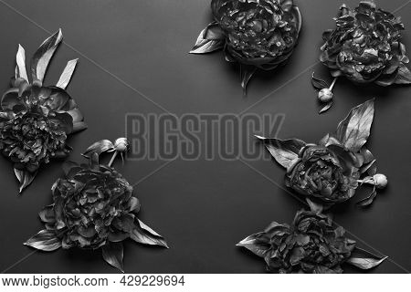 Surreal Black And White Peonies Frame On Black Background. Dark Floral Background