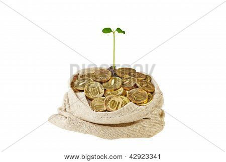 Canvas Bag Full With Gold Coins And A Gentle Green Sprout