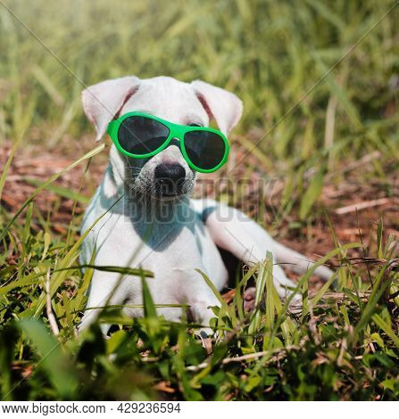 Dog Friend Cute Canine Smiling