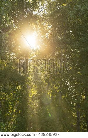 The Sun Shines Through The Green Muddy Foliage In The Forest. A Decorative Background Of Foliage