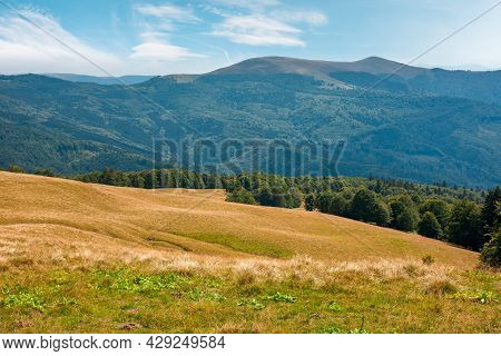 Summer Mountain Landscape With Forest On The Hill. Primeval Beech Trees On A Grassy Slopes Of Svydov