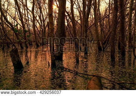 Flood Forest And Dead Tree Problems From Climate Change. Environmental Topics Background. Concept Of