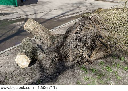 Clearing A City Road From A Tree That Fell During A Storm. The Consequences Of The Storm In The City