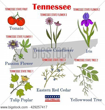 Tennessee. Set Of Usa Official State Symbols. Vector Hand Drawn Illustration