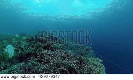 Reef Coral Scene. Tropical Underwater Sea Fish. Hard And Soft Corals, Underwater Landscape. Philippi