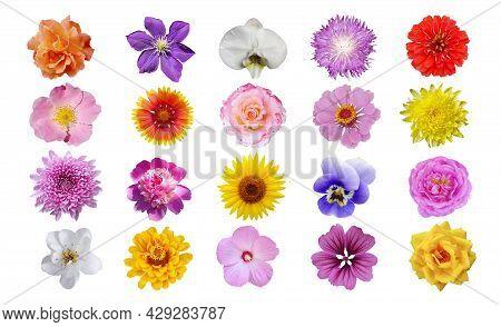 Macro Photo Of Flowers Set: Rose, Sunflower, Zinnia, Cirsium, Pion, Chrysanthemum, Hibiscus, Pansy,
