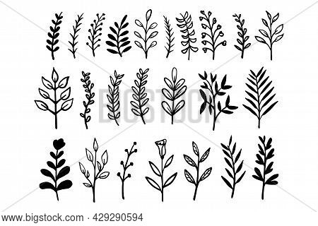 Collection Of Leaves And Branches Silhouette Hand Drawn Vector Illustration. Floral Set Of Black Out