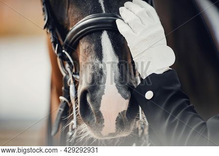 A Close-up Of The Horse's Nose And The Rider's Gloved Hand. The Nose Of A Bay Horse With A White Gro