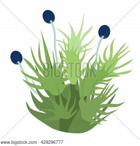 Liver Moss Is A Ptilidium Ciliare Logo Icon On A White Background