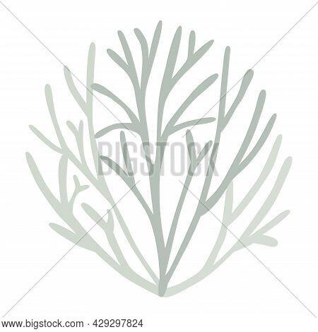 Gray Green Lichen Bush, Icelandic Moss, Logo On White Background