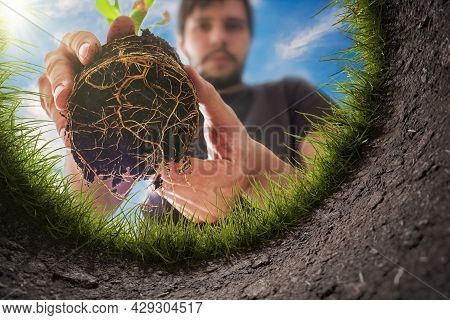 Young Man Is Planting The Plant In The Garden. View From Inside Of Hole In Soil.