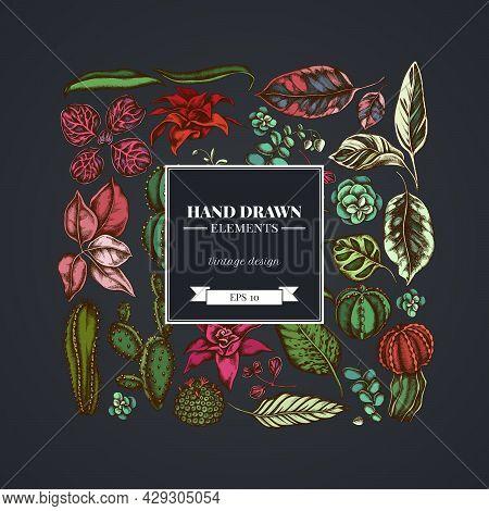 Square Floral Design On Dark Background With Ficus, Iresine, Kalanchoe, Calathea, Guzmania, Cactus S