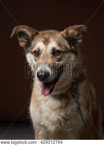 Mixed Breed Dog On Brown Background. Pet Smile In The Photo Studio.