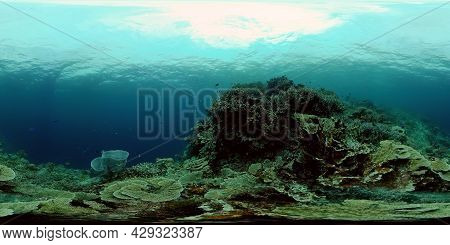 Colourful Tropical Coral Reef. Hard And Soft Corals, Underwater Landscape. Philippines. Virtual Real